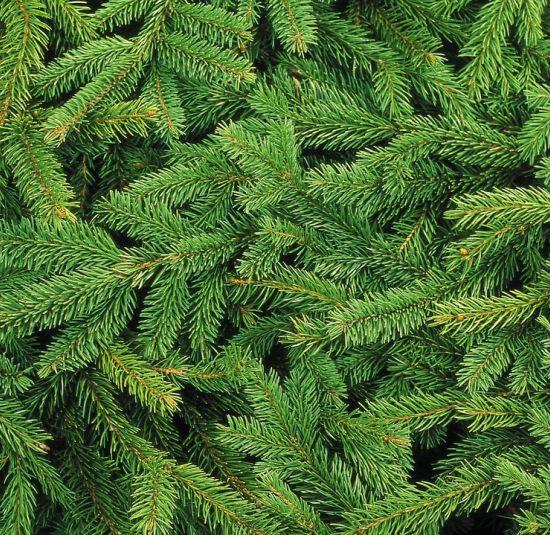recollida-arbres-nadal